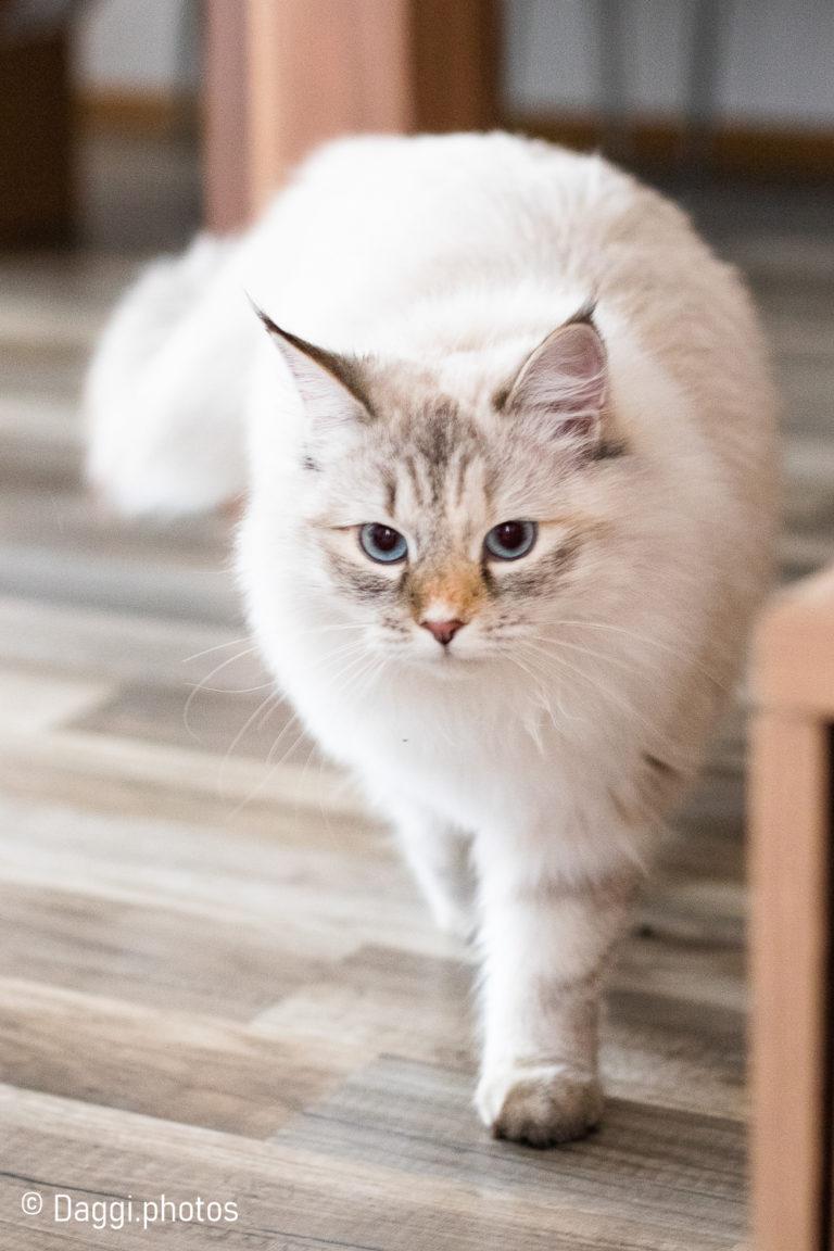 Katzenkönigin