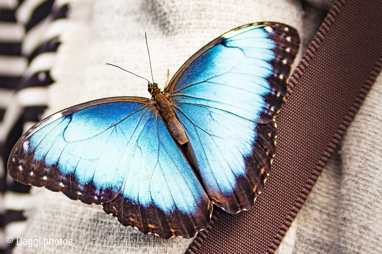 Schmetterlingshooting